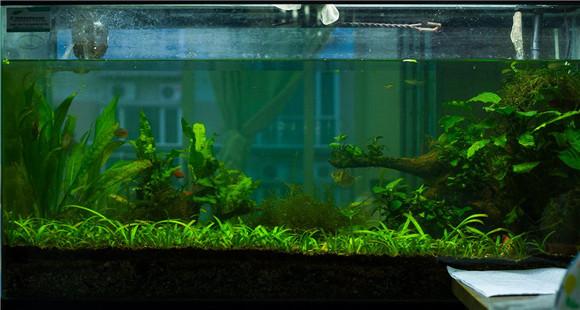 生物鱼缸设计图